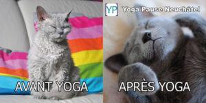 Un chat gris tout froissé avant le yoga et un chat gris tout détendu après le yoga