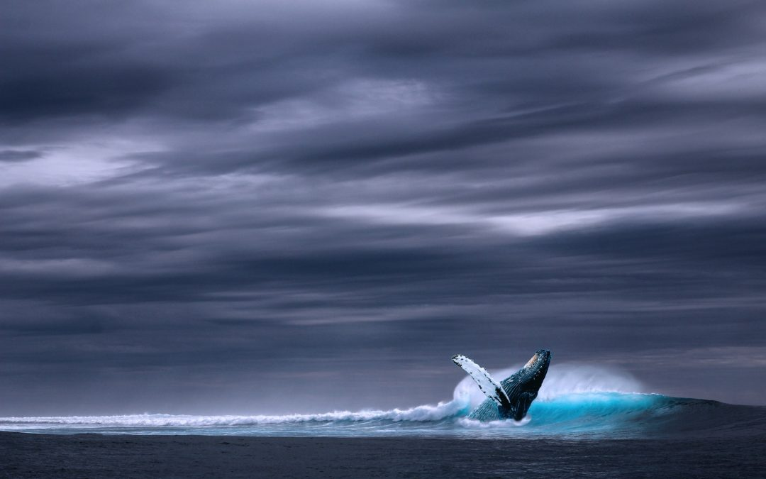 La baleine 52