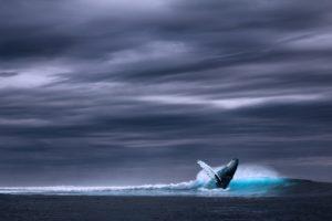 Baleine qui saute hors de l'eau
